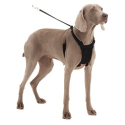 Sporn Comfort Harness Black