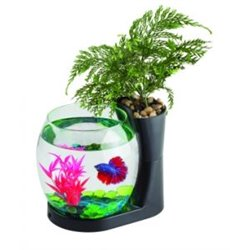 Blue Betta Planter Black 1L