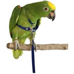 Bird Harness Large