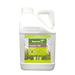 Apparent Poacher 750 1kgs (Imazapyr) Herbicide