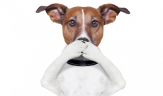 Pet has bad breath? You can do something for that!