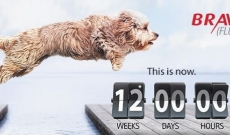 Bravecto. 1 Chewable tab. 3 Months cover for Fleas & Ticks.